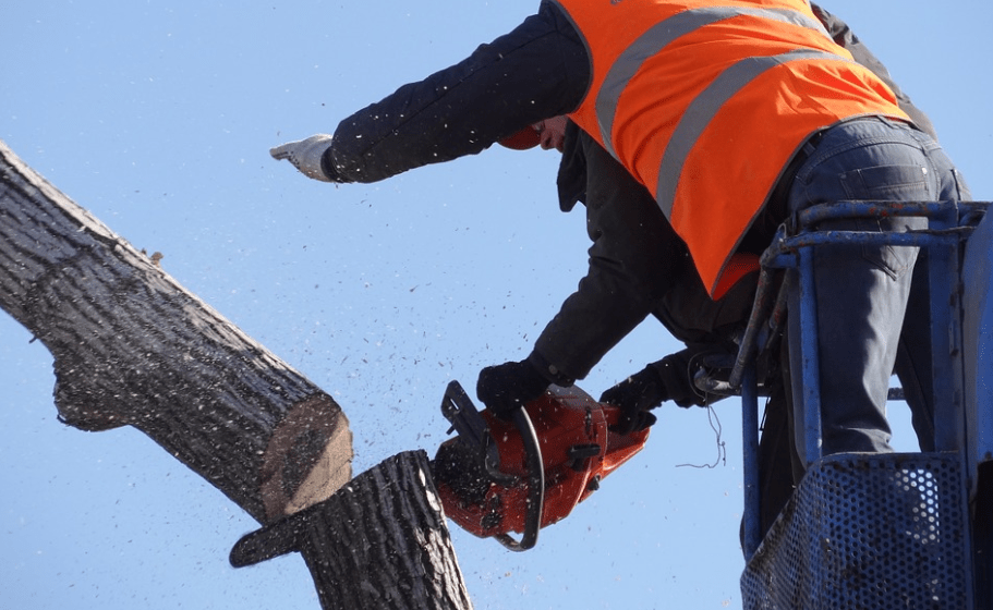 An image of tree cutting service in Tustin, CA.