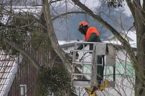 An image of tree pruning in Tustin, CA.