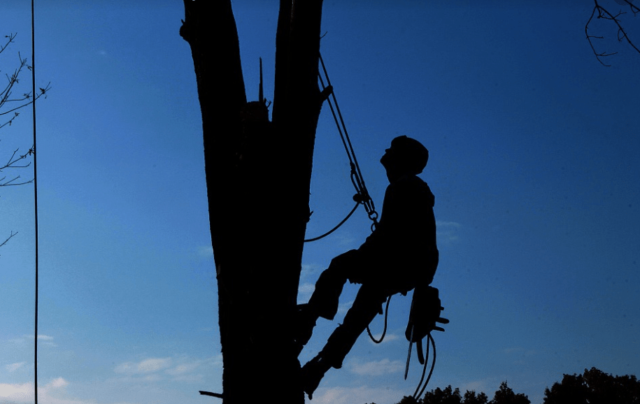 A picture of tree service in Tustin, CA