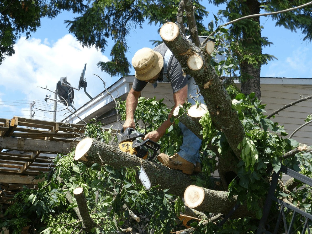This image shows tree service in Tustin.